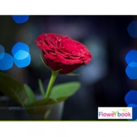 Single Red Rose RM022