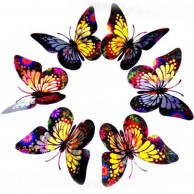 3D Butterflies Multi Color