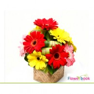 Mix colour gerberas 10 nos arrangemement CON009
